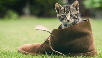 Как избавить обувь от запаха кошачьей мочи, эффективные средства